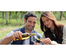Il Salento e i suoi vino
